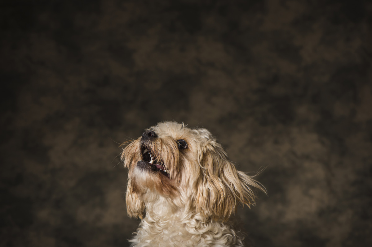Pet Photography Liverpool